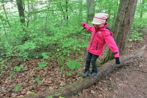 an 2 Tagen je Woche sind wir u.a. im Wald nahe Weilimdorf unterwegs